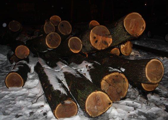 Кременчужане вырубили дубово-липовый лес в Кременчугском районе (ФОТО) (фото) - фото 1