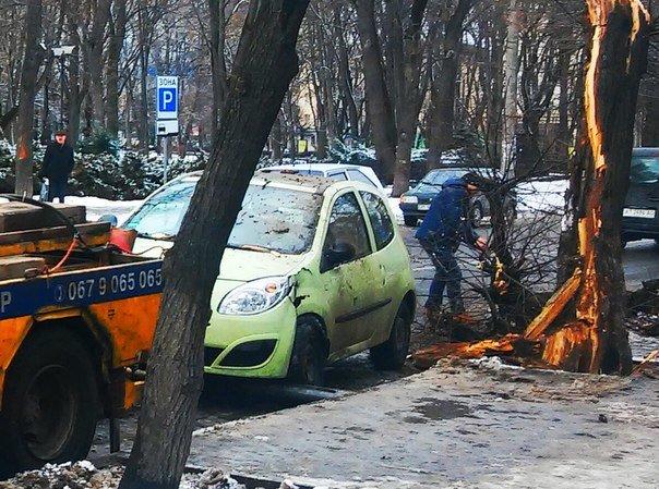 У Франківську на автомобіль впало дерево (фото) - фото 1
