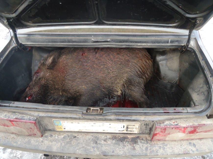 В Володарском районе браконьеры подстрелили дикого кабана (ФОТО) (фото) - фото 1