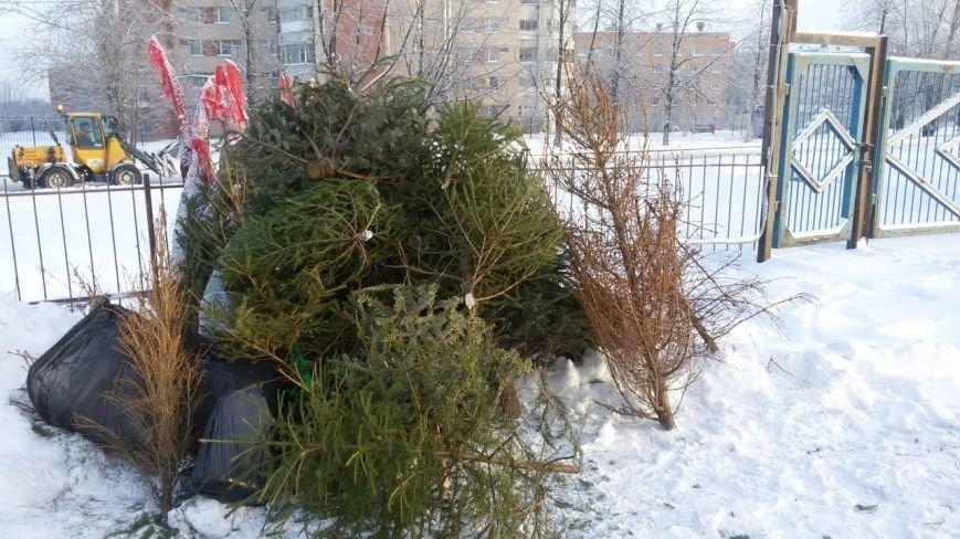 Пушкинцы собрали более шестидесяти ёлок на радость бизонам (фото) - фото 1