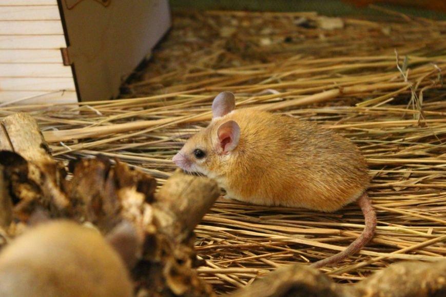 В зоопарке Ростова-на-Дону открылась новая зимняя экспозиция, фото-4