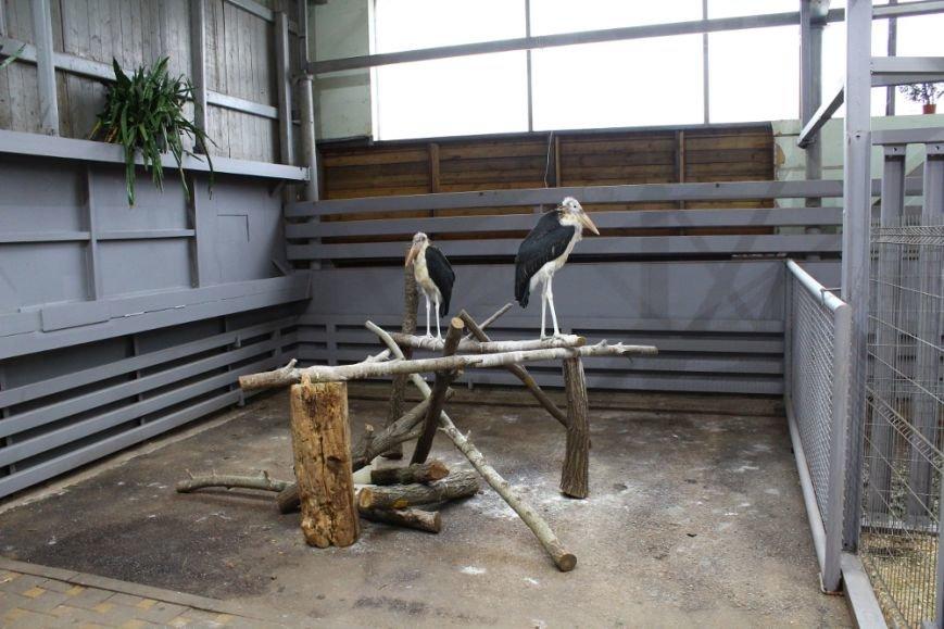 В зоопарке Ростова-на-Дону открылась новая зимняя экспозиция, фото-2