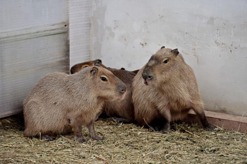 В зоопарке Ростова-на-Дону открылась новая зимняя экспозиция, фото-3
