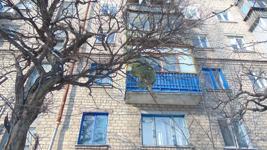 Мариупольцы нашли новое применение новогодним елкам (ФОТОФАКТ) (фото) - фото 3