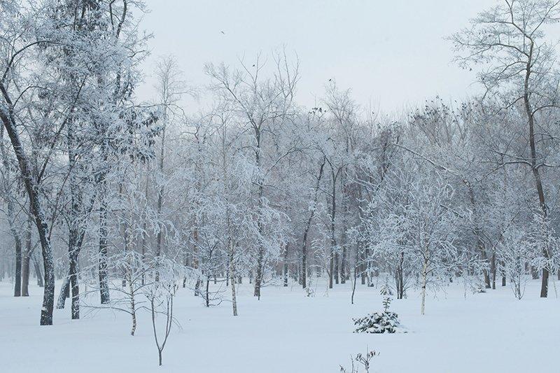Белые дни. Белгороду осталось совсем недолго находиться под снегом перед скорым потеплением (фото) - фото 7