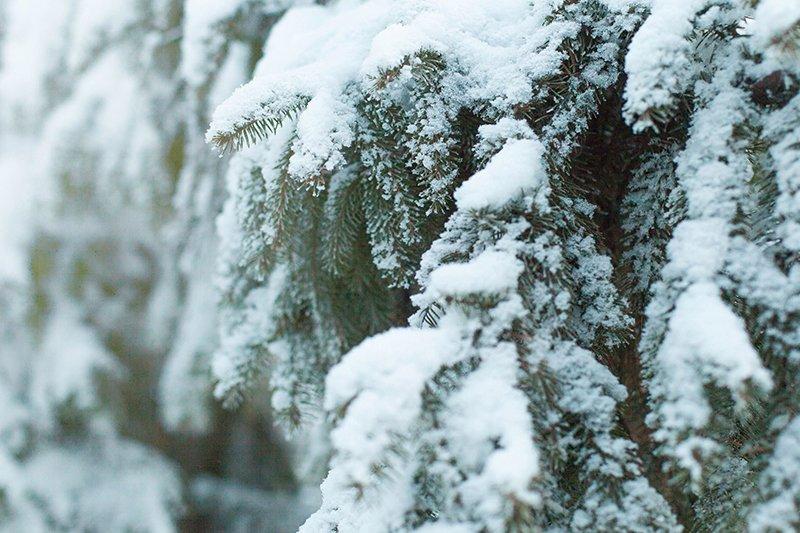 Белые дни. Белгороду осталось совсем недолго находиться под снегом перед скорым потеплением (фото) - фото 2