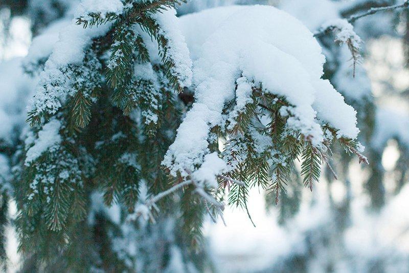 Белые дни. Белгороду осталось совсем недолго находиться под снегом перед скорым потеплением (фото) - фото 10