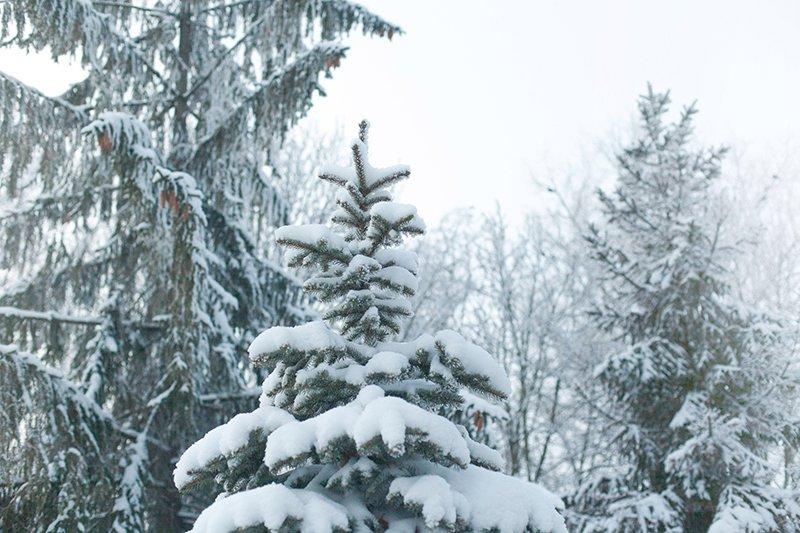Белые дни. Белгороду осталось совсем недолго находиться под снегом перед скорым потеплением (фото) - фото 8