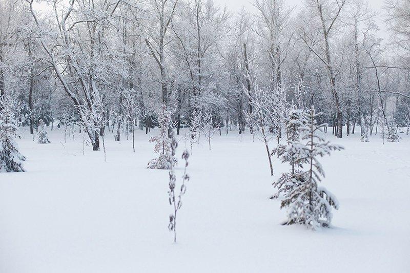 Белые дни. Белгороду осталось совсем недолго оставаться под снегом перед скорым потеплением (фото) - фото 11