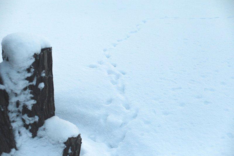 Белые дни. Белгороду осталось совсем недолго находиться под снегом перед скорым потеплением (фото) - фото 3