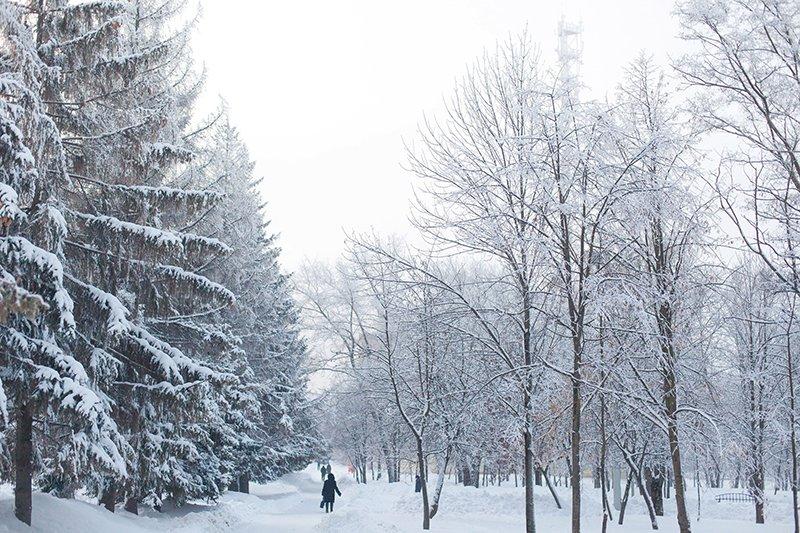Белые дни. Белгороду осталось совсем недолго оставаться под снегом перед скорым потеплением (фото) - фото 12