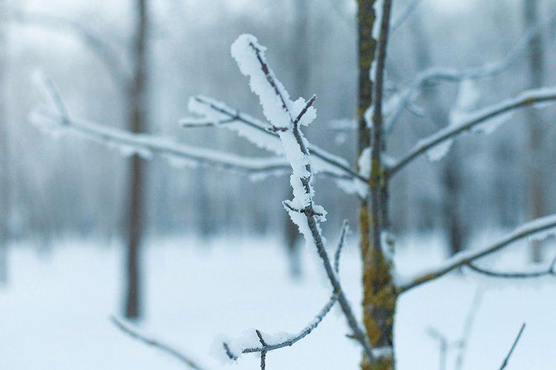 Белые дни. Белгороду осталось совсем недолго находиться под снегом перед скорым потеплением (фото) - фото 1
