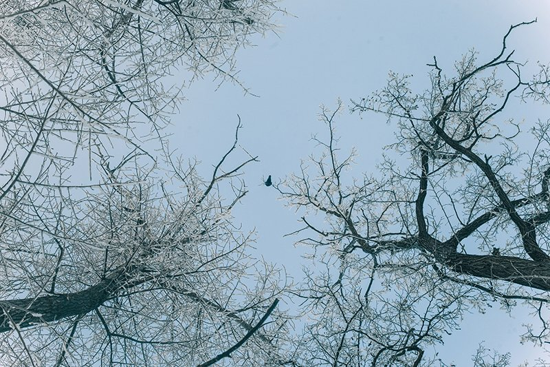 Белые дни. Белгороду осталось совсем недолго находиться под снегом перед скорым потеплением (фото) - фото 4