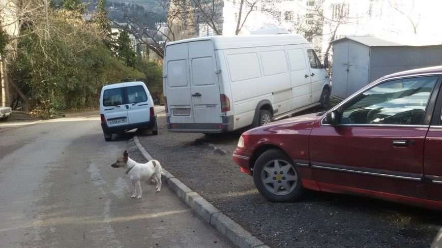 #Ялтадлялюдей: Пешеходы Ялты продолжают жаловаться на автомобилистов (фото) - фото 4