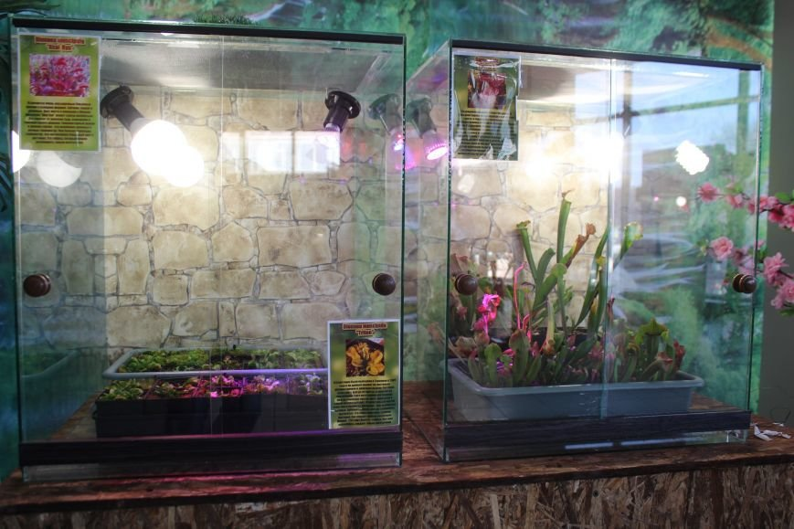 В Днепродзержинске можно попасть в «Мир джунглей» и побывать на выставке растений-хищников (фото) - фото 1