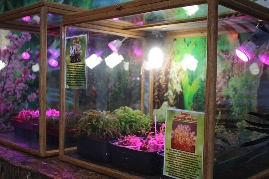 В Днепродзержинске можно попасть в «Мир джунглей» и побывать на выставке растений-хищников (фото) - фото 4