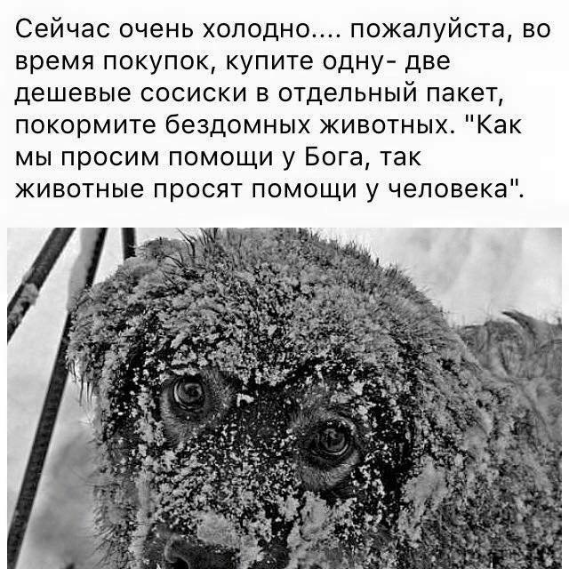 56cc09de9af63ac640421899201dba6c Одесситы новогодними ёлками помогли питомцам зоопарка