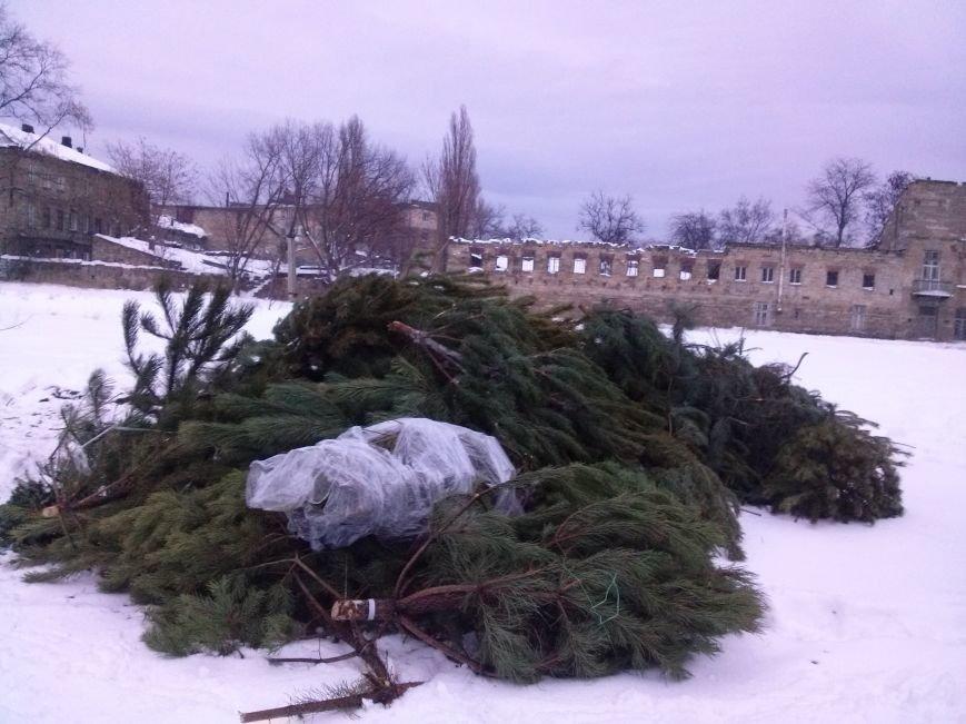Одесситы новогодними ёлками помогли питомцам зоопарка (ФОТО) (фото) - фото 1