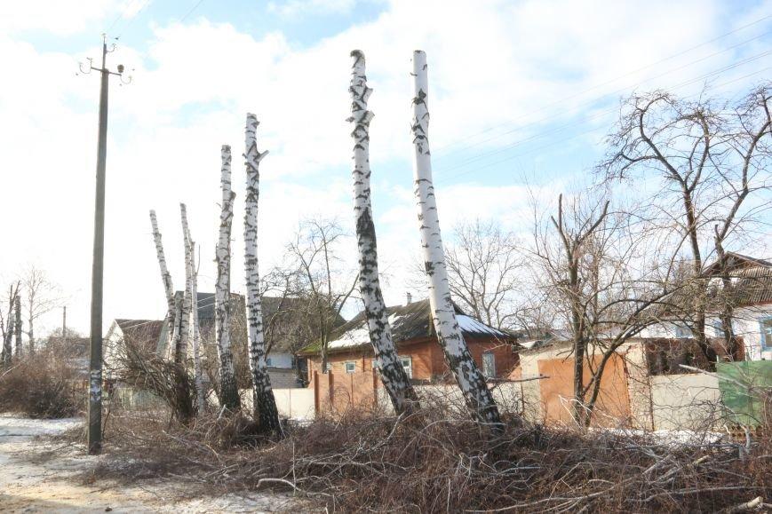 КП «Зеленбуд» будет жаловаться на энергетиков за обрезку деревьев в прокуратуру, фото-5