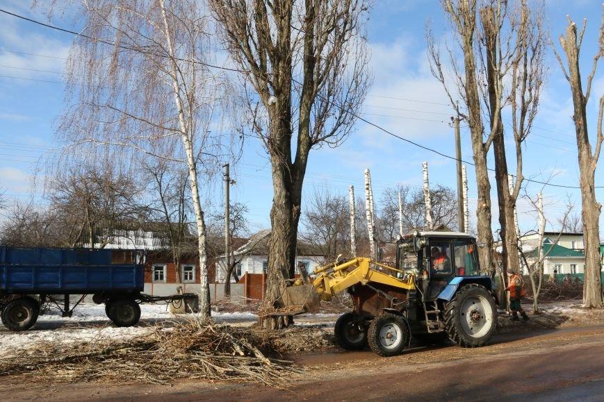 КП «Зеленбуд» будет жаловаться на энергетиков за обрезку деревьев в прокуратуру, фото-9
