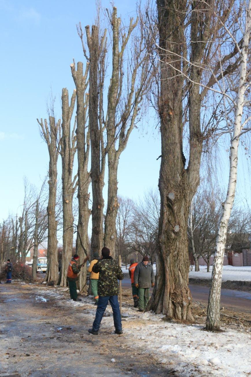 КП «Зеленбуд» будет жаловаться на энергетиков за обрезку деревьев в прокуратуру, фото-4
