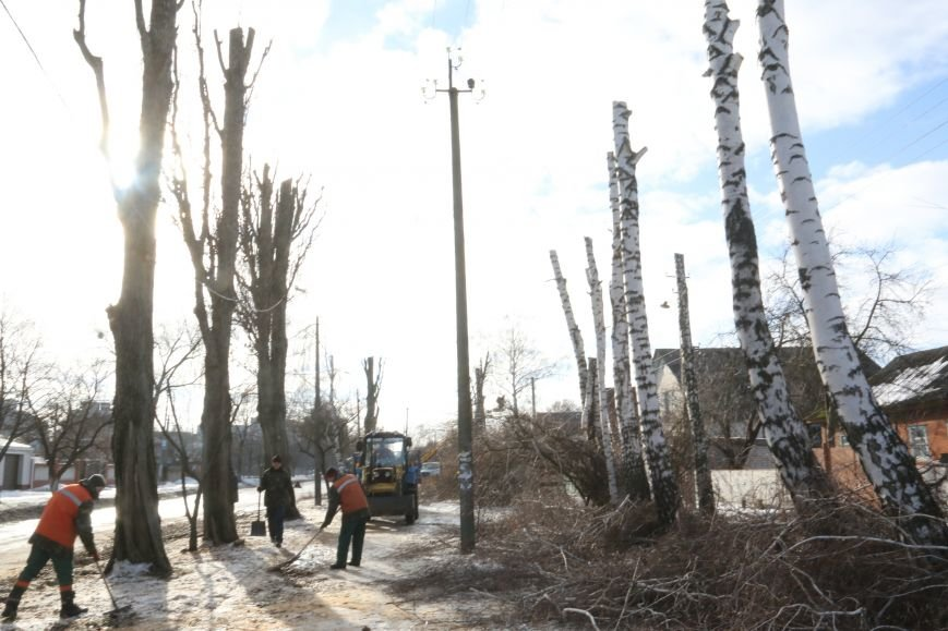 КП «Зеленбуд» будет жаловаться на энергетиков за обрезку деревьев в прокуратуру, фото-6