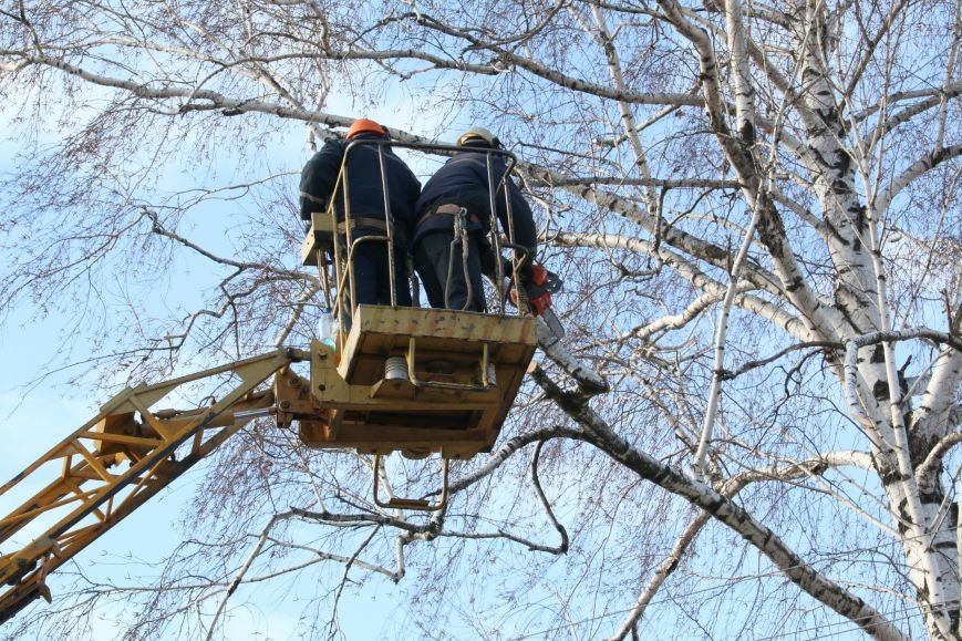 КП «Зеленбуд» будет жаловаться на энергетиков за обрезку деревьев в прокуратуру, фото-3