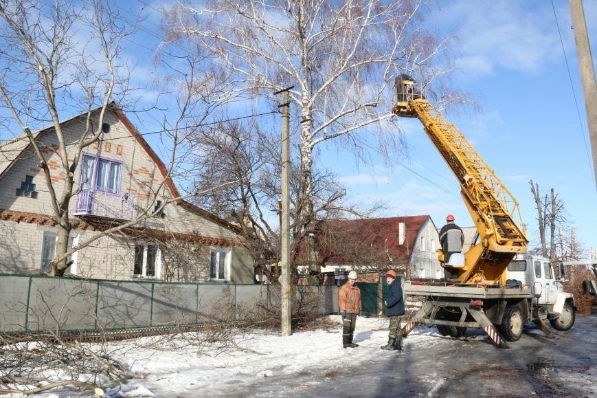 КП «Зеленбуд» будет жаловаться на энергетиков за обрезку деревьев в прокуратуру, фото-1