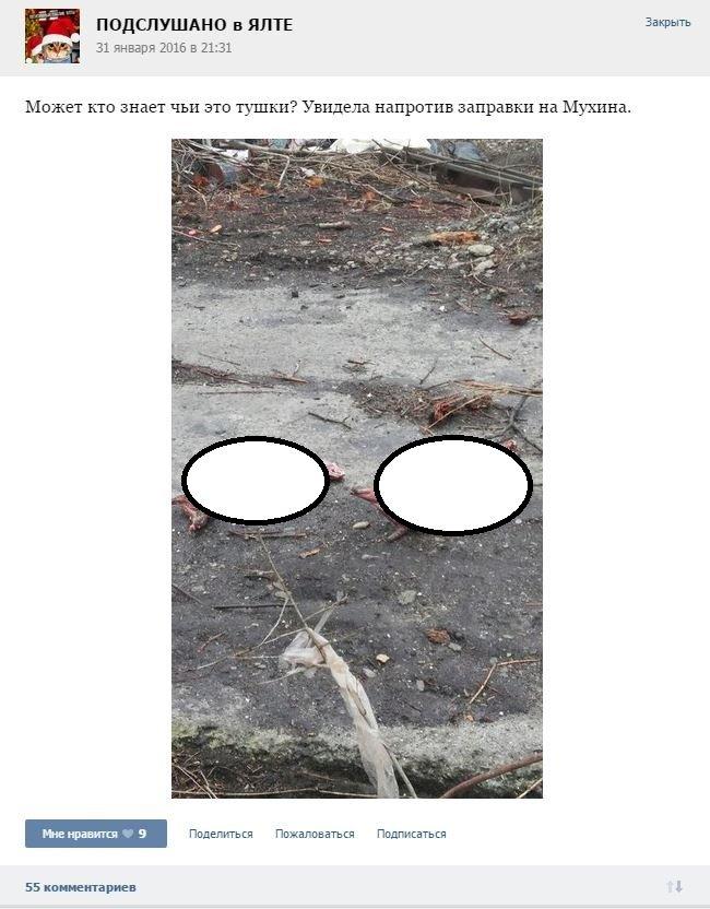 Живодеры в Ялте выбросили на улицу животных без шкур (фото) - фото 1