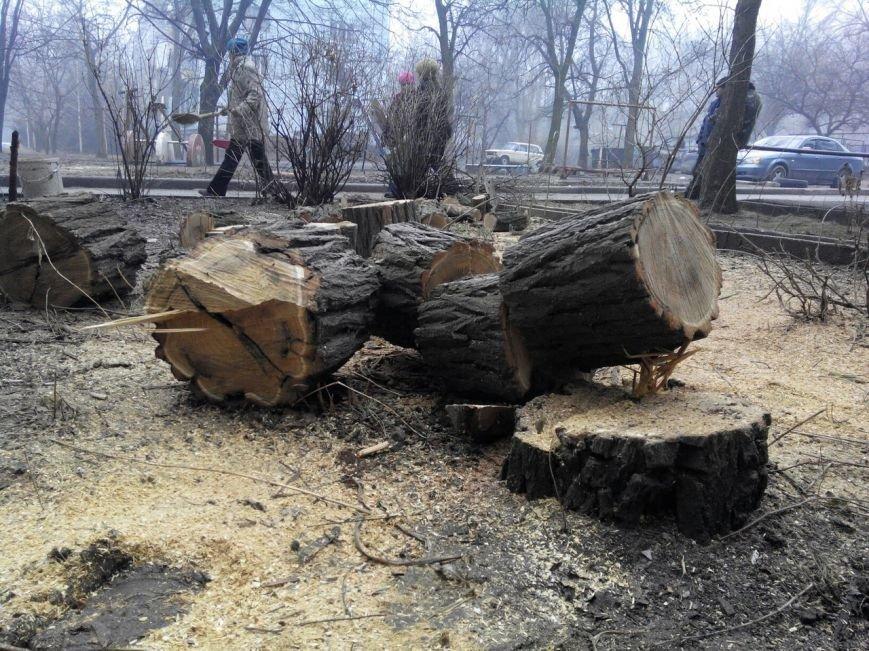В центре Запорожья коммунальщики спиливают деревья, горожане против, - ФОТО (фото) - фото 1