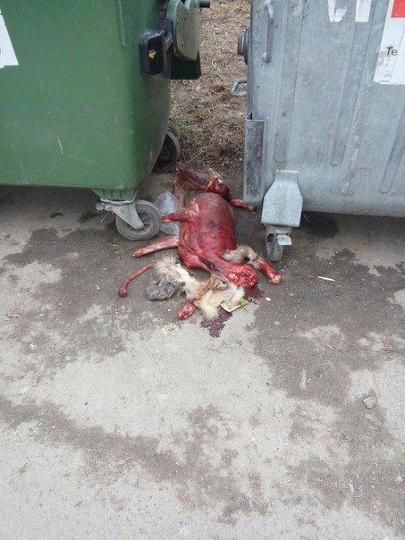 У Тернополі знайшли обезголовлену тварину (фото +18) (фото) - фото 1