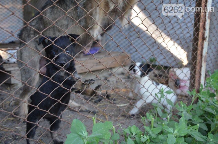Что делать с бездомными животными? Питомник в Славянске не справляется (фото) - фото 1