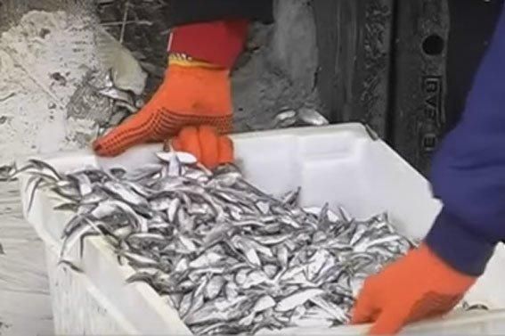 ДТП на Полтавщине: в сельский двор влетела фура с рыбой (ФОТО) (фото) - фото 1