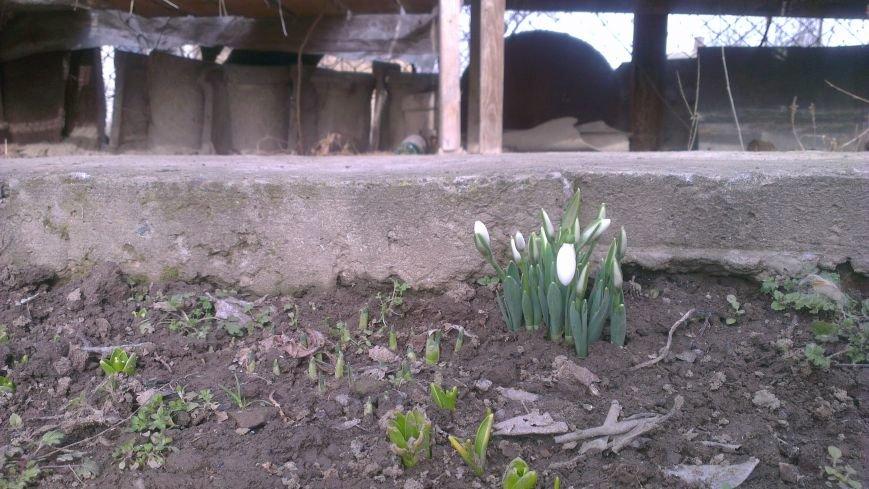 В Одесской области из-под снега пробились первые цветы (ФОТО) (фото) - фото 1