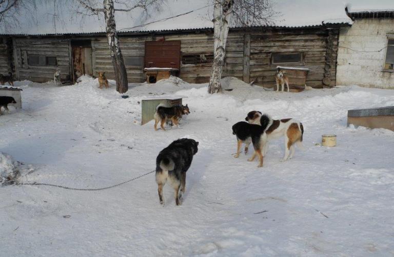 Городской приют для бездомных животных готовится принимать новых питомцев (фото) (фото) - фото 1