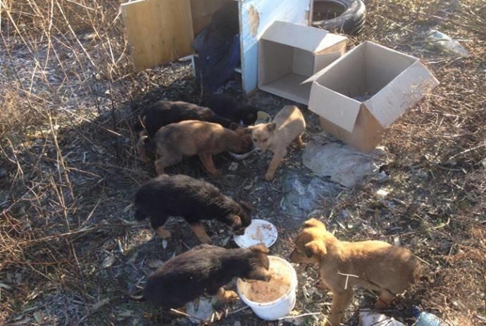Ну и ну! В Анапе кот выкормил щенков мышами (фото) - фото 1