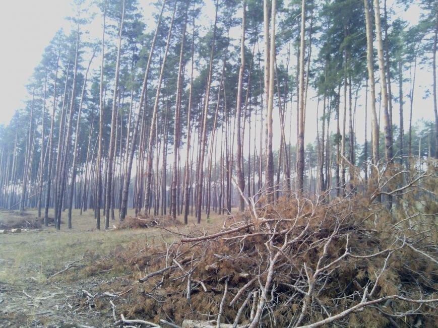 В Луганской области происходит масштабная вырубка леса (ФОТО), фото-1