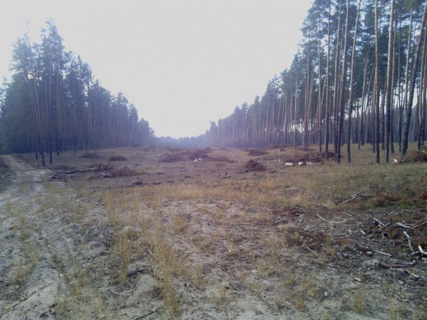 В Луганской области происходит масштабная вырубка леса (ФОТО) (фото) - фото 2