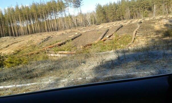 В Луганской области происходит масштабная вырубка леса (ФОТО) (фото) - фото 4
