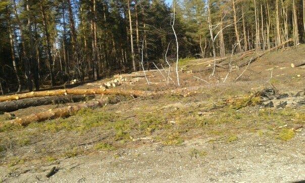 В Луганской области происходит масштабная вырубка леса (ФОТО) (фото) - фото 3