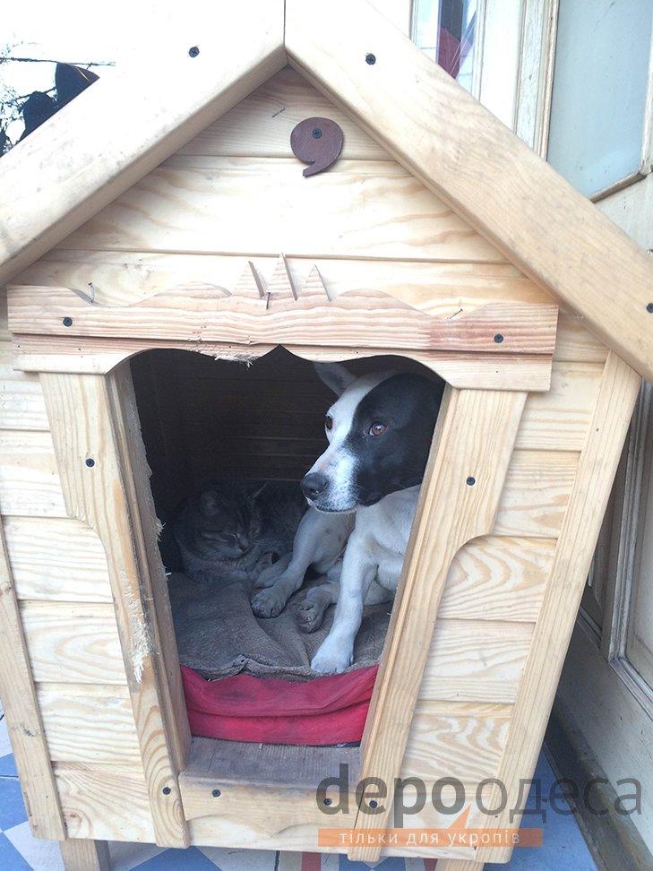 Необычная дружба. На Дерибасовской  одной будке живут кот и собака (ФОТО) (фото) - фото 1