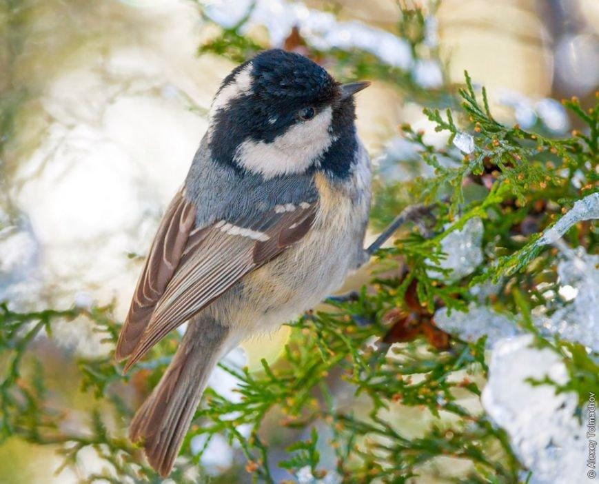 До Хортицы долетела редкая птица, - ФОТО (фото) - фото 1