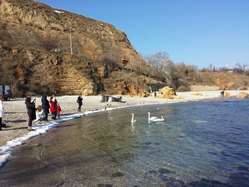 На одесских пляжах лебедей пытаются кормить свиными отбивными (ФОТО) (фото) - фото 1