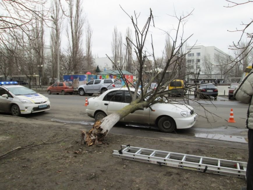 В Одессе дерево упало на автомобиль (ФОТО) (фото) - фото 1