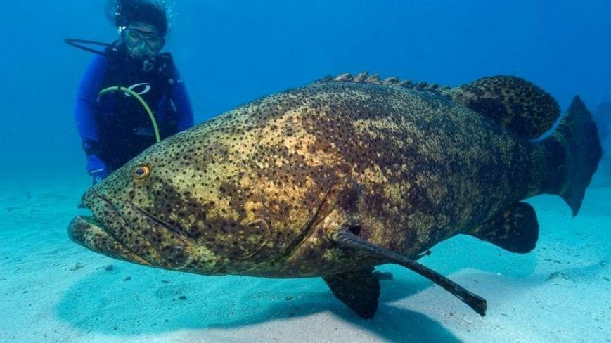 10 малоизвестных рыб-убийц (фото) - фото 6