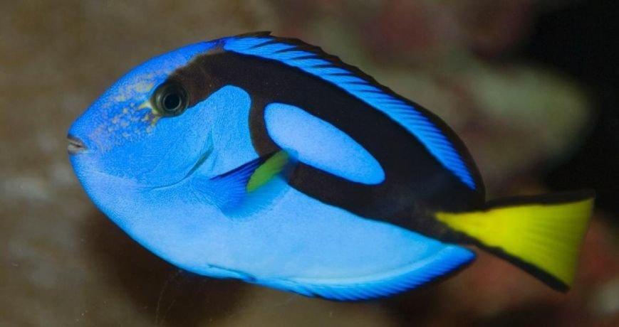 10 малоизвестных рыб-убийц (фото) - фото 9