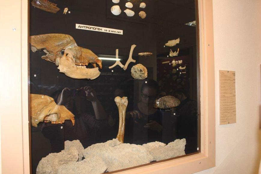 """Где живет тарбозавр Кеша и можно ли камень превратить в """"шерсть""""?, фото-12"""