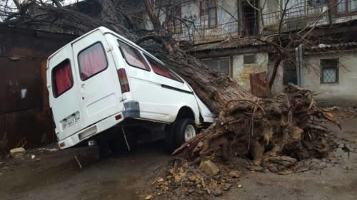 В Одессе ветер с корнем вырвал дерево и опрокинул на микроавтобус (ФОТО) (фото) - фото 1