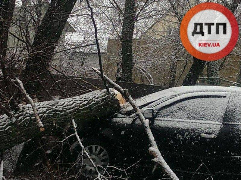 На Осокорках Volkswagen на высокой скорости врезался в дерево (ФОТО) (фото) - фото 1