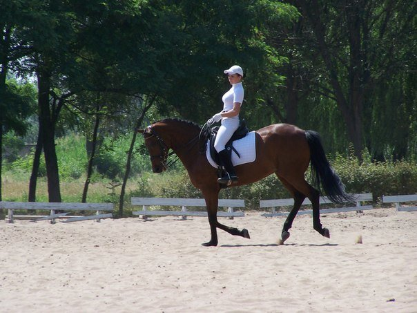 """Алина Жук: """"Лошадь такой же член команды, как и наездник"""", фото-3"""